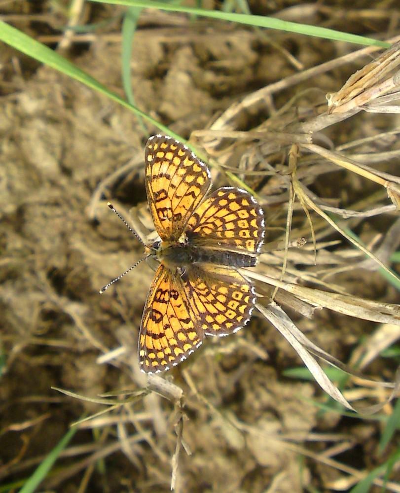 Bloemen en vlinderimpressies (100)