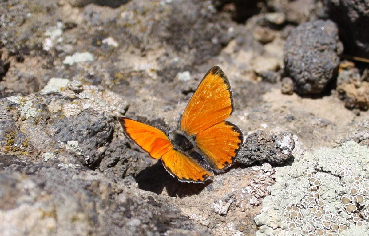 Bloemen en vlinderimpressies (101)