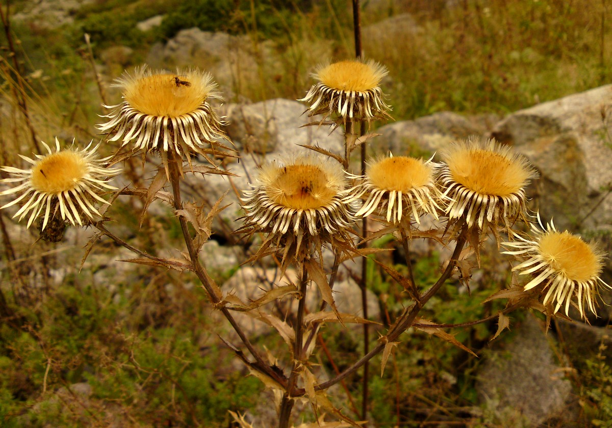 Bloemen en vlinderimpressies (15)