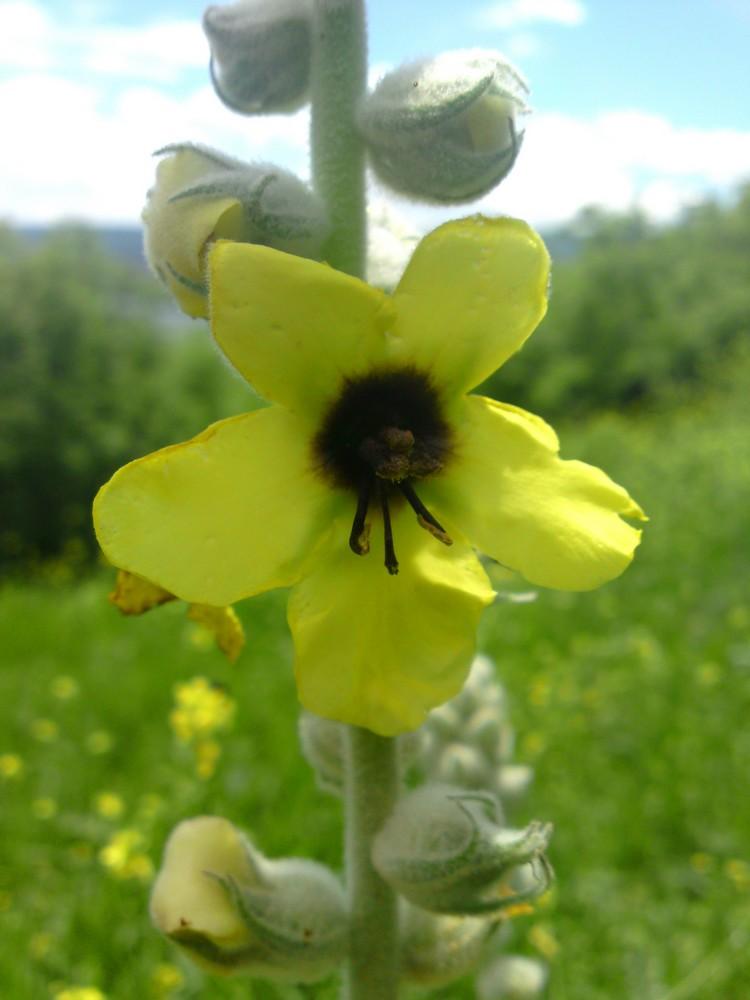 Bloemen en vlinderimpressies (2)