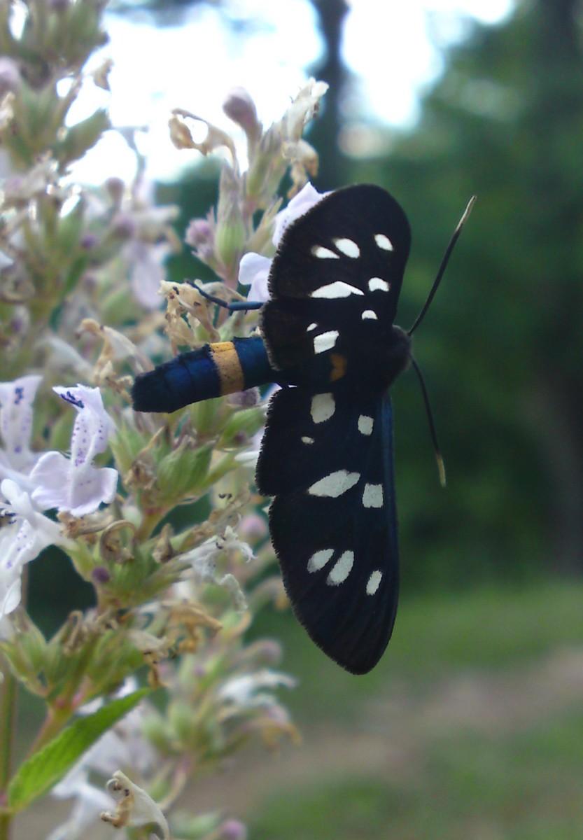 Bloemen en vlinderimpressies (28)