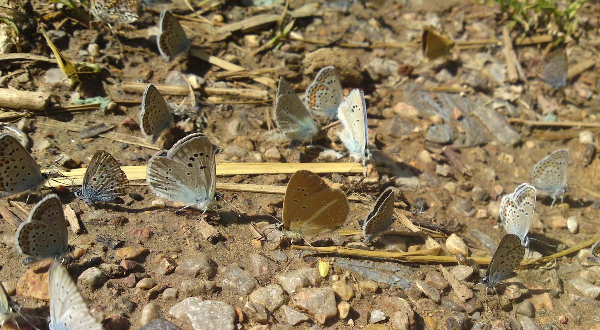 Bloemen en vlinderimpressies (3)