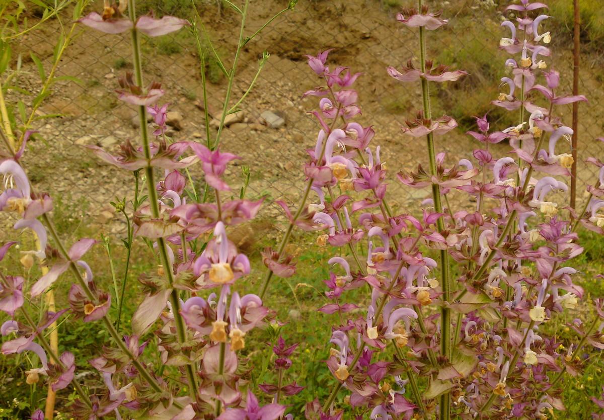 Bloemen en vlinderimpressies (33)