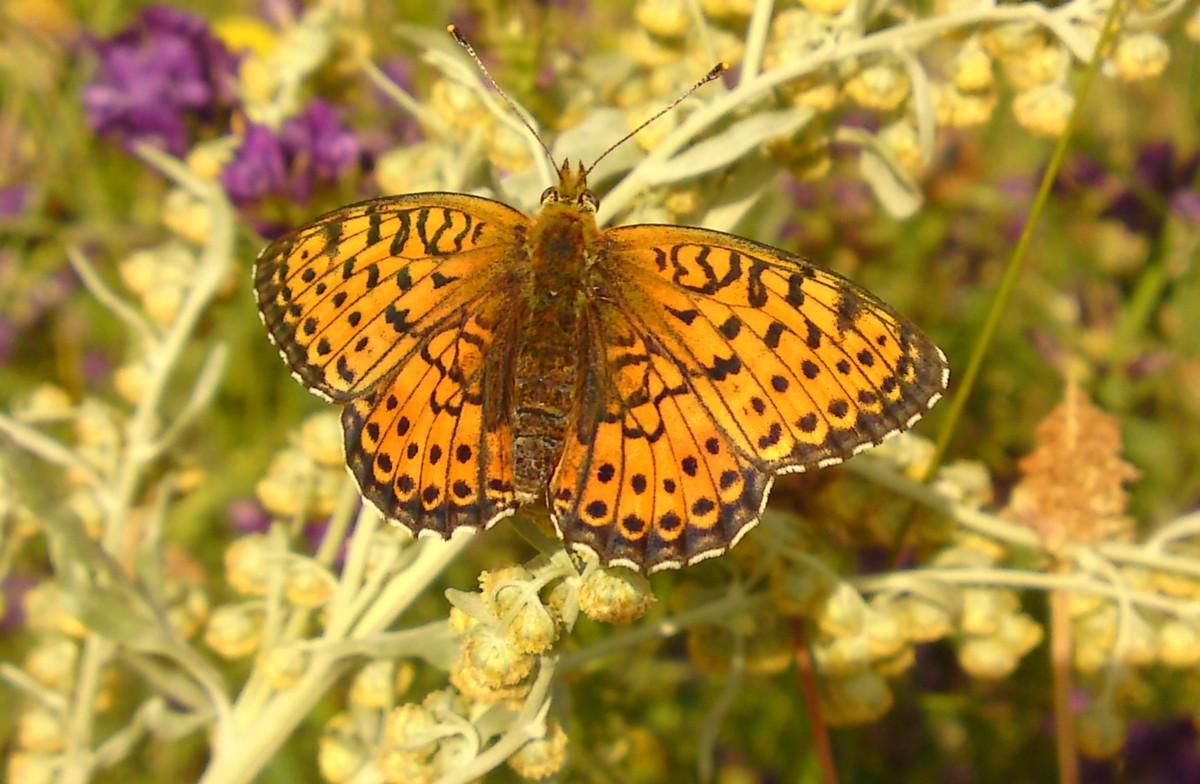 Bloemen en vlinderimpressies (34)