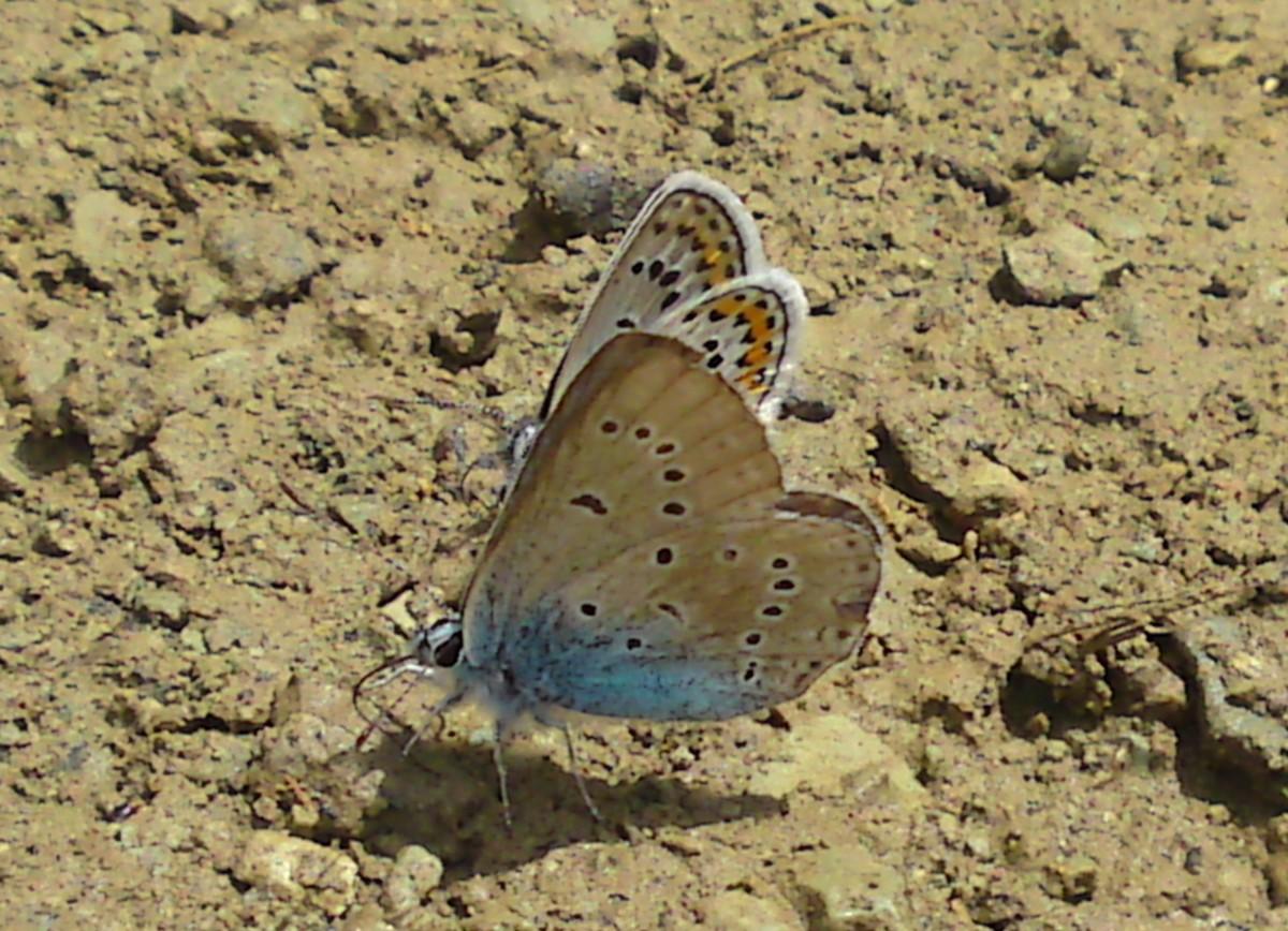 Bloemen en vlinderimpressies (36)
