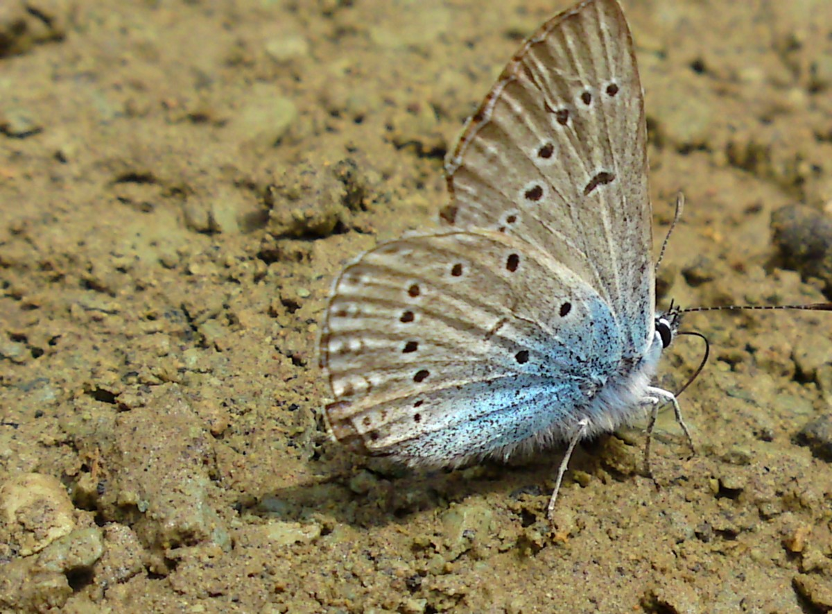 Bloemen en vlinderimpressies (37)