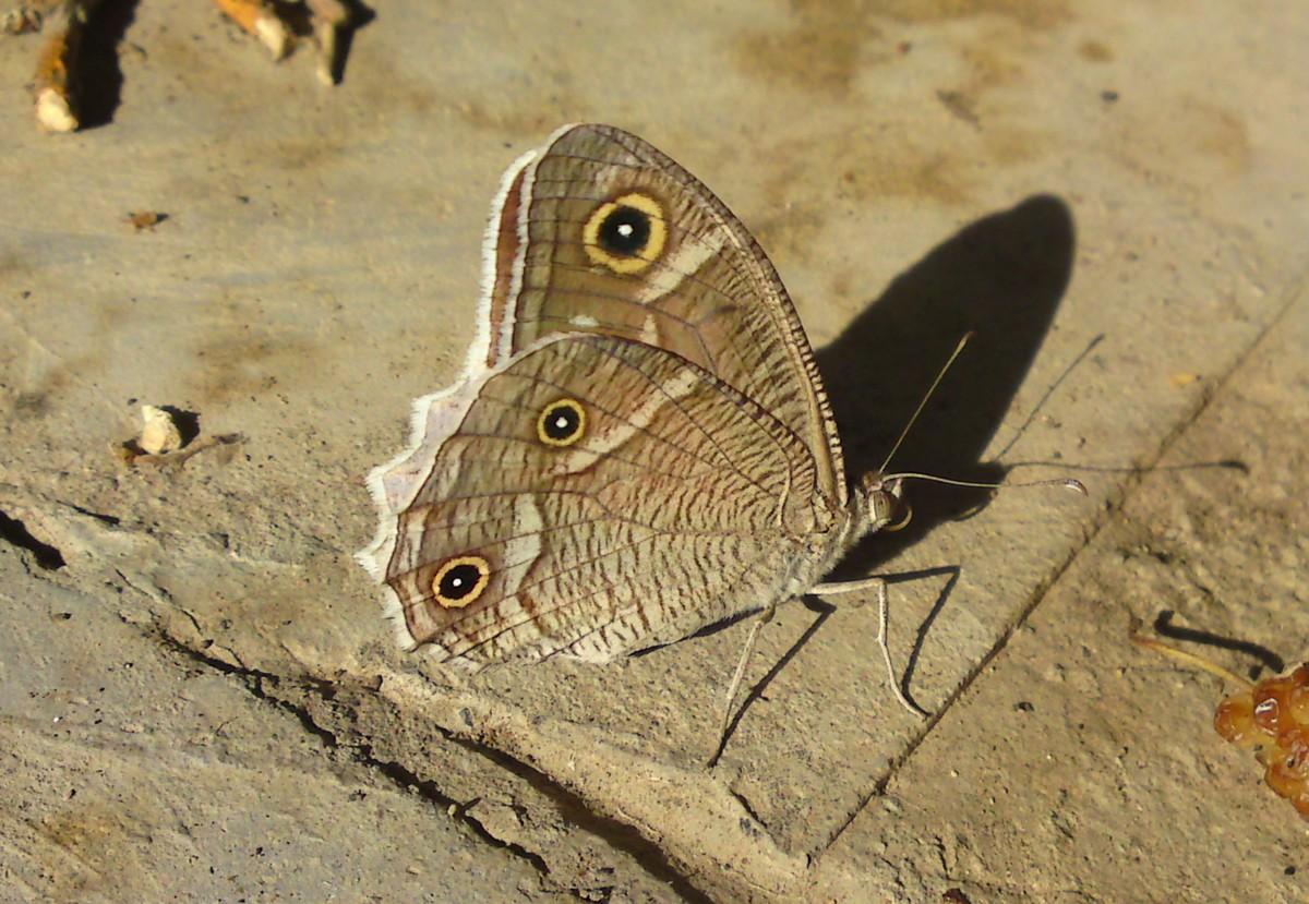 Bloemen en vlinderimpressies (41)