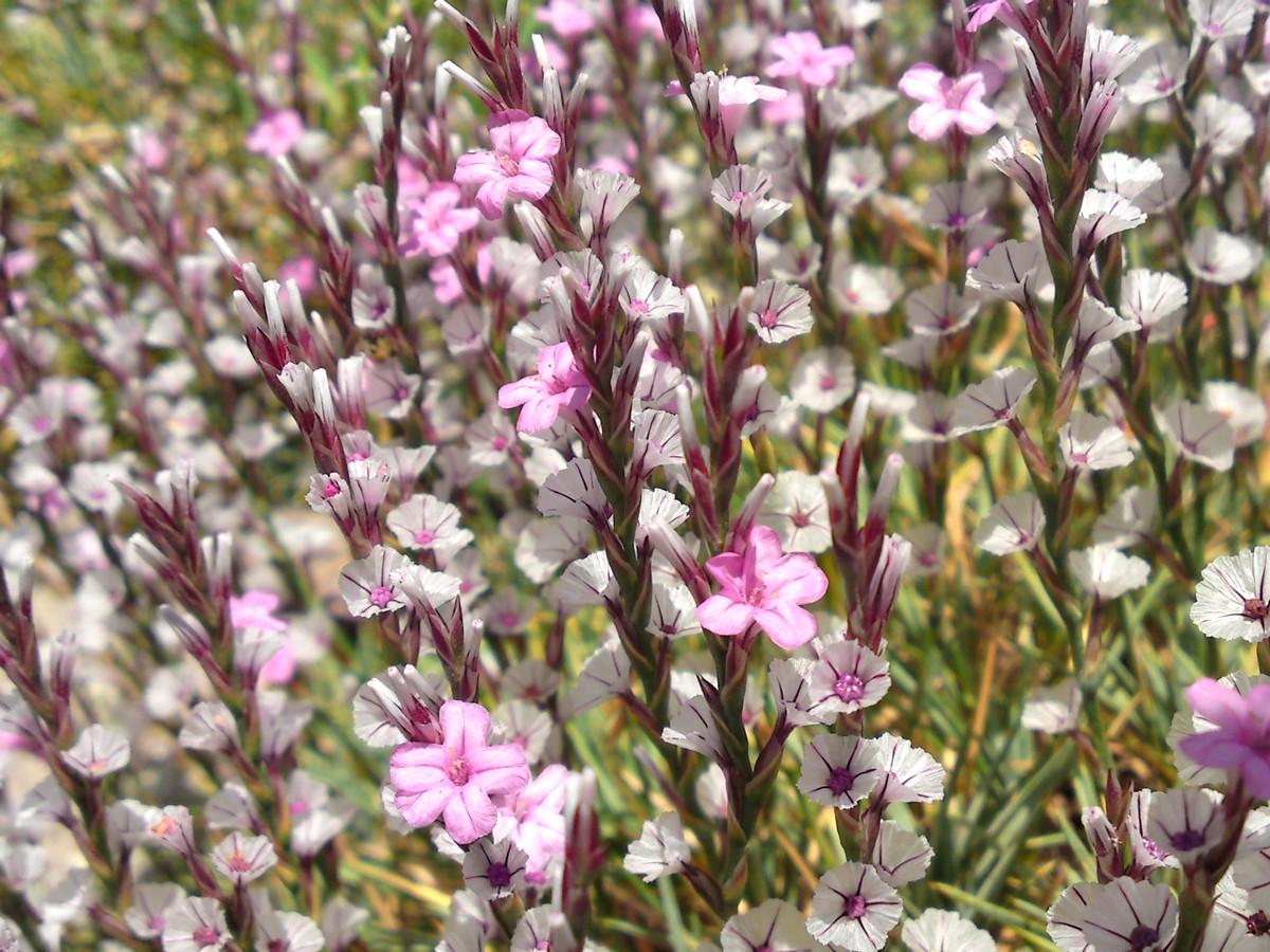 Bloemen en vlinderimpressies (44)