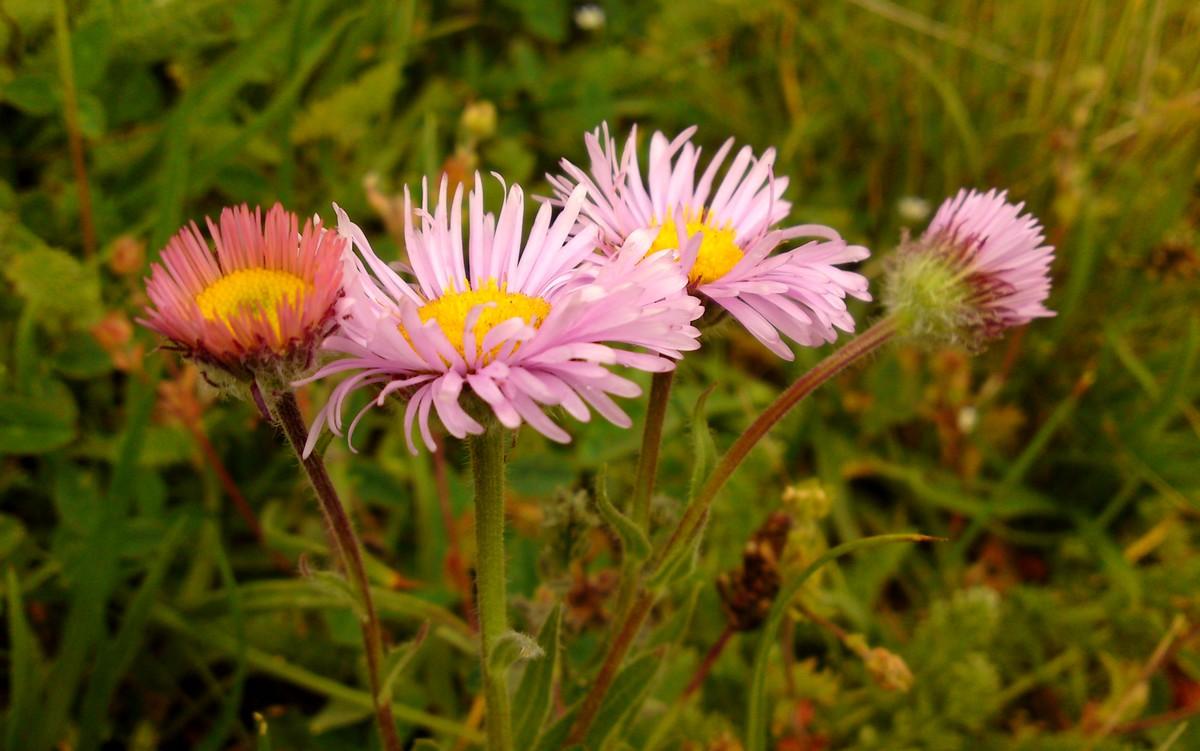 Bloemen en vlinderimpressies (48)