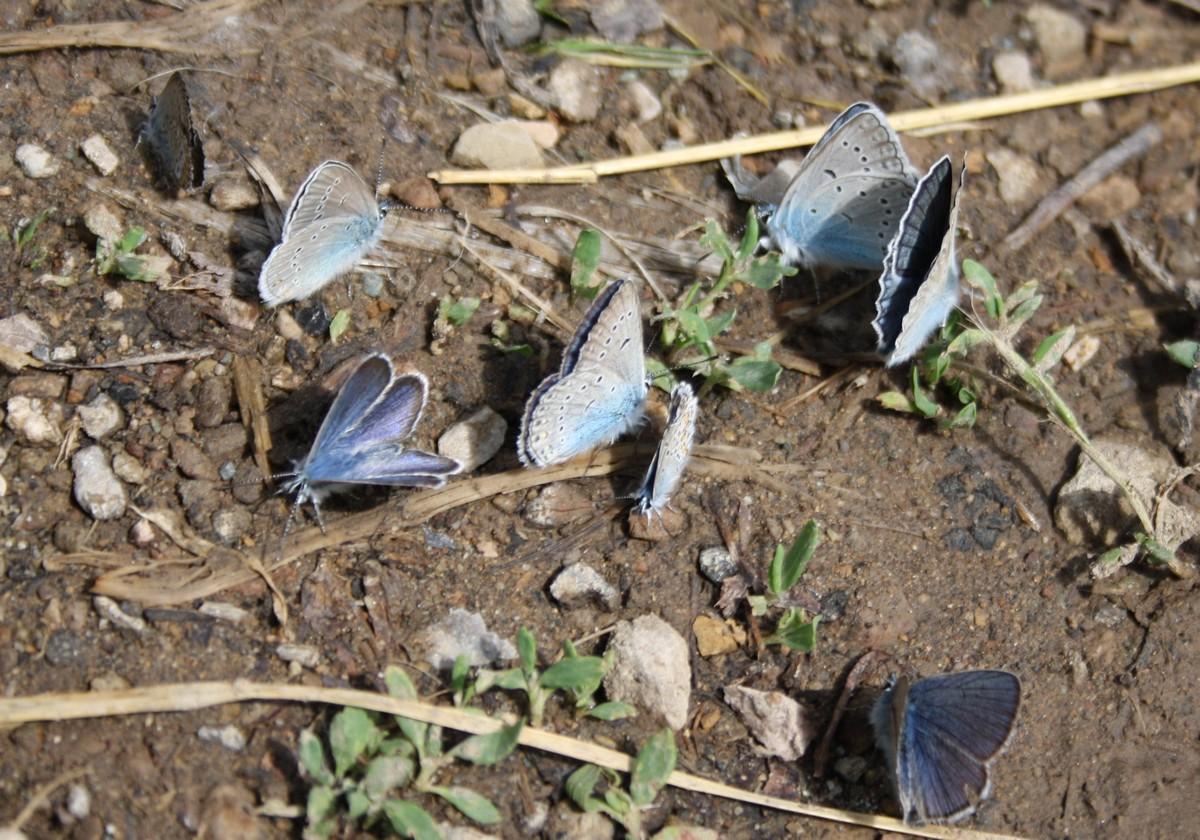 Bloemen en vlinderimpressies (5)