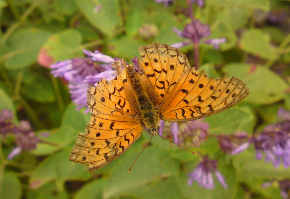Bloemen en vlinderimpressies (50)