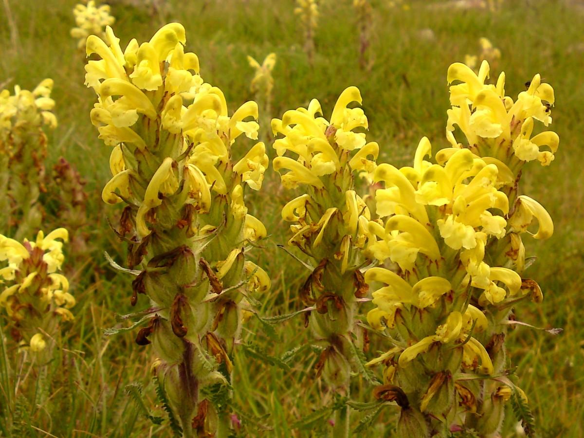 Bloemen en vlinderimpressies (58)