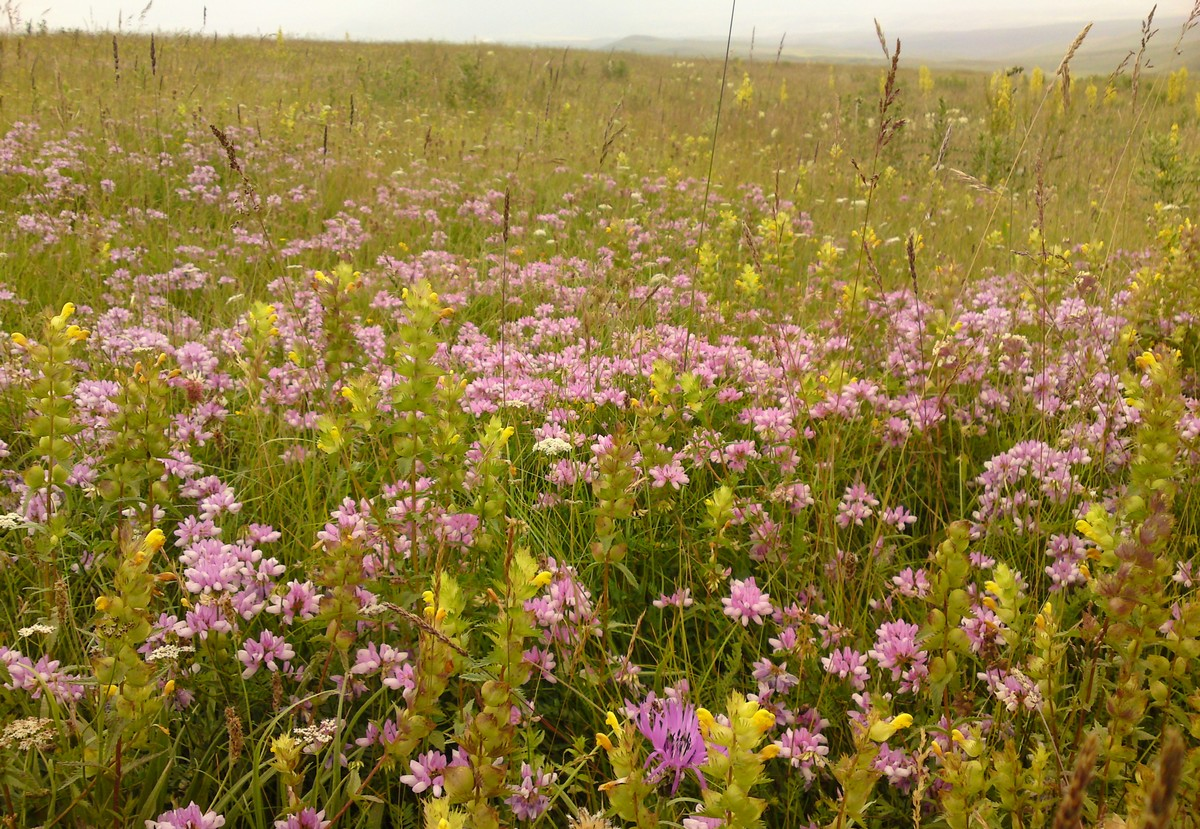 Bloemen en vlinderimpressies (62)