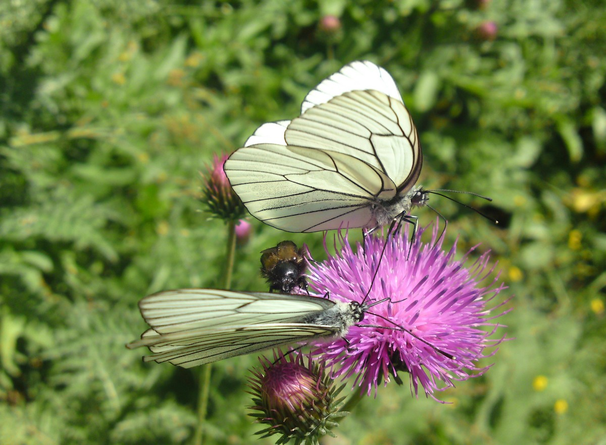 Bloemen en vlinderimpressies (64)