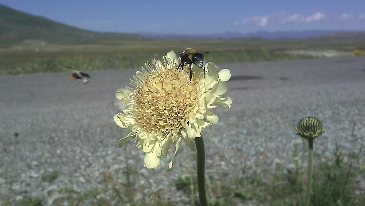 Bloemen en vlinderimpressies (65)