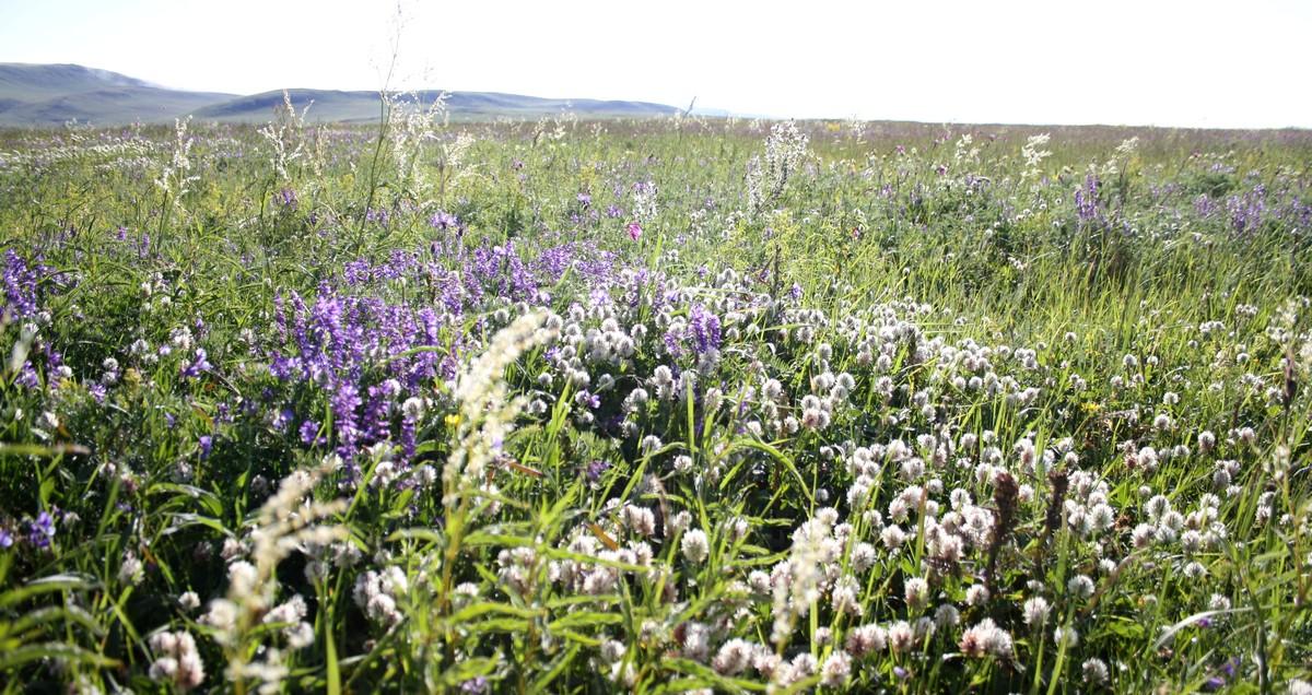Bloemen en vlinderimpressies (67)
