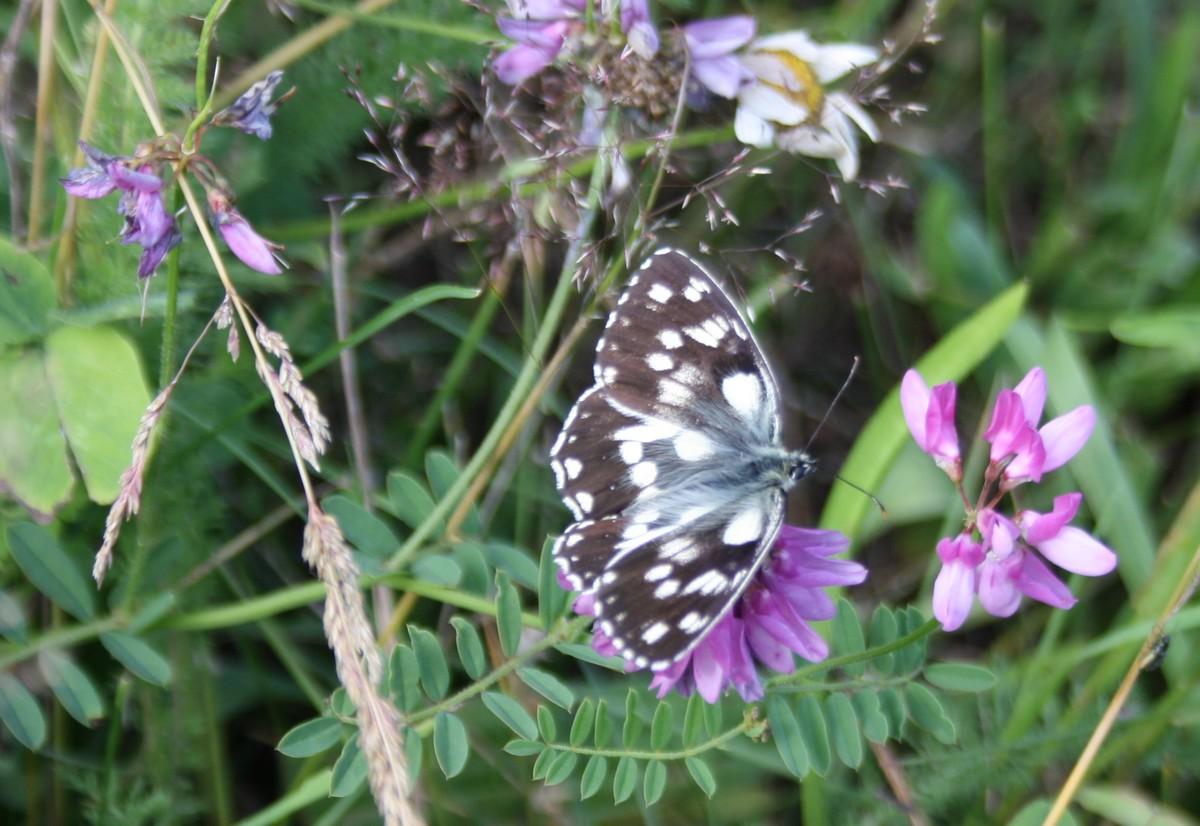 Bloemen en vlinderimpressies (68)