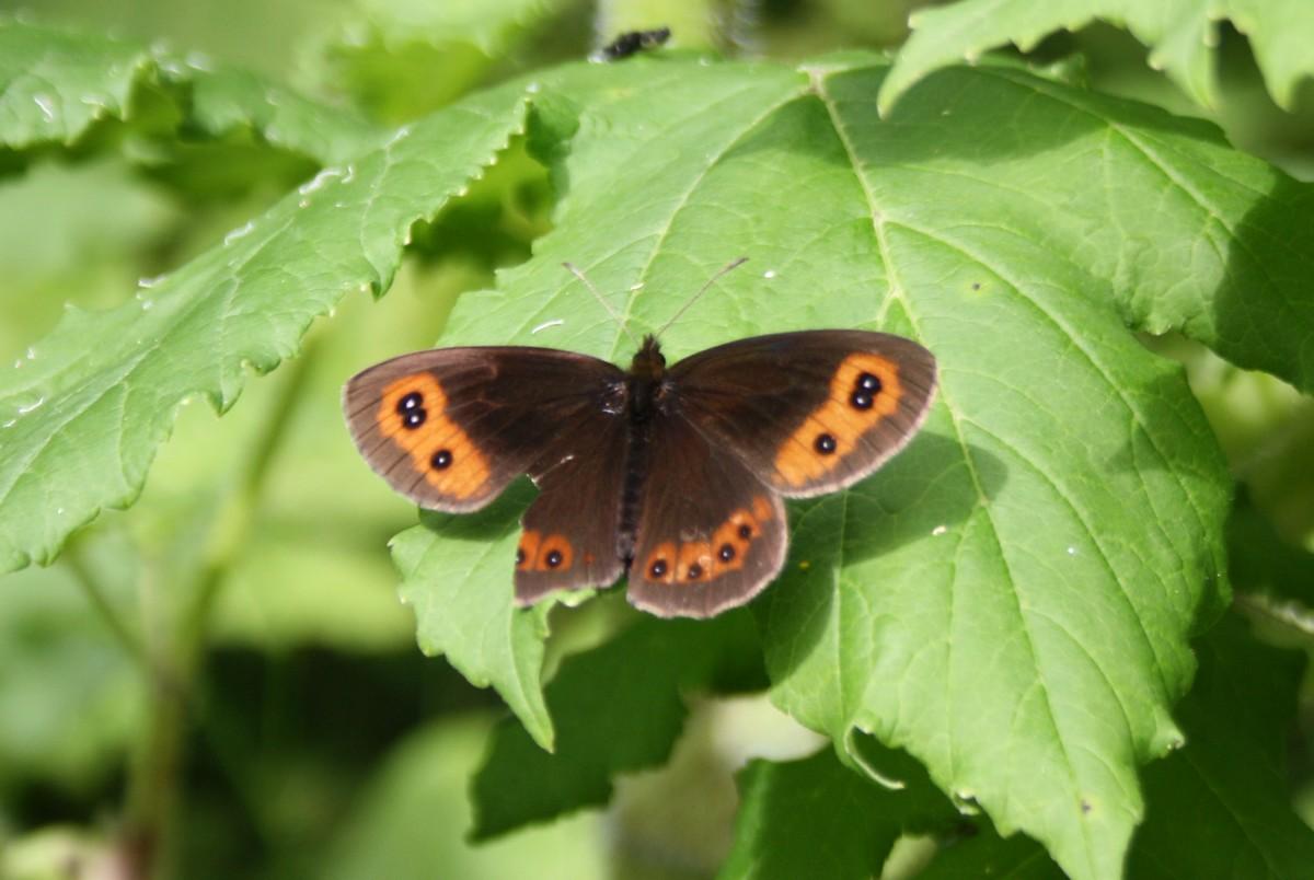 Bloemen en vlinderimpressies (69)