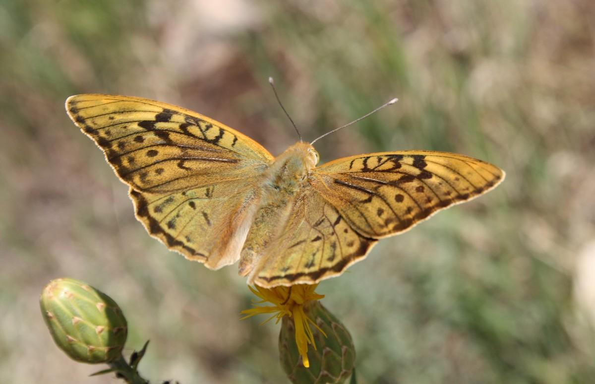 Bloemen en vlinderimpressies (72)