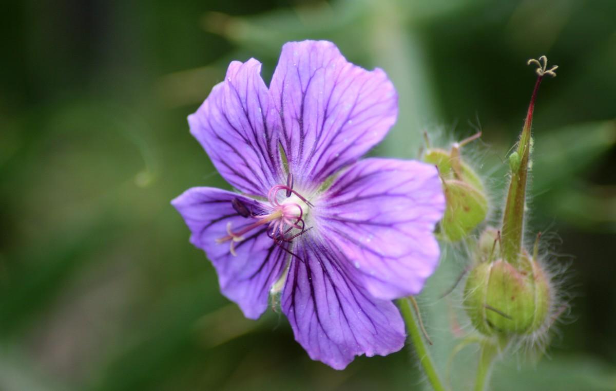 Bloemen en vlinderimpressies (74)