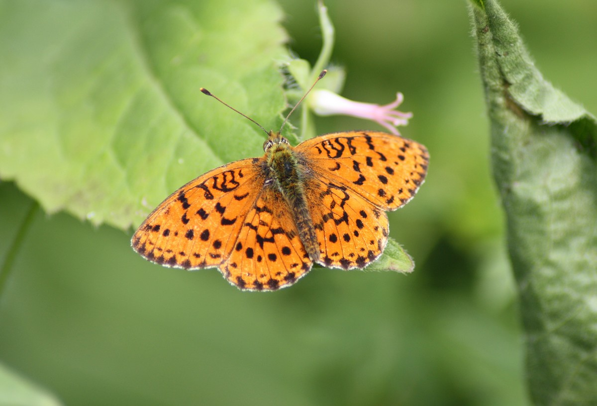 Bloemen en vlinderimpressies (77)