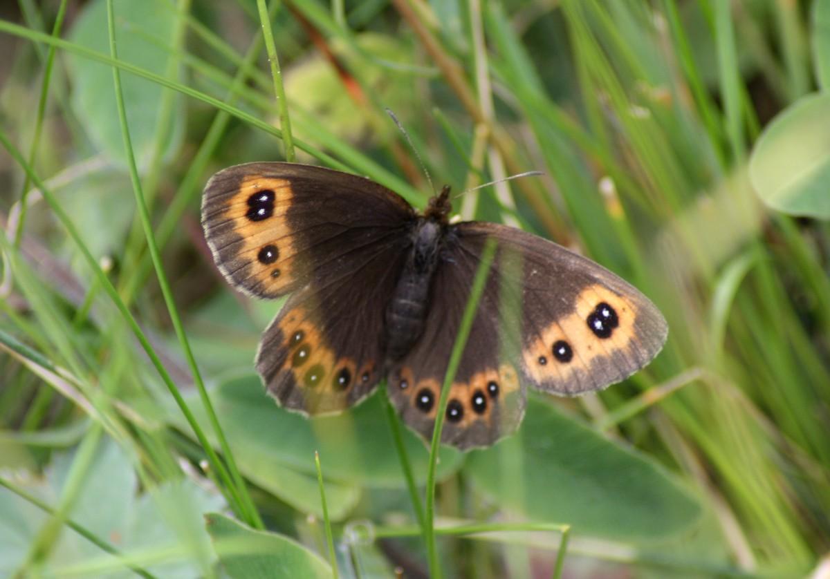 Bloemen en vlinderimpressies (79)