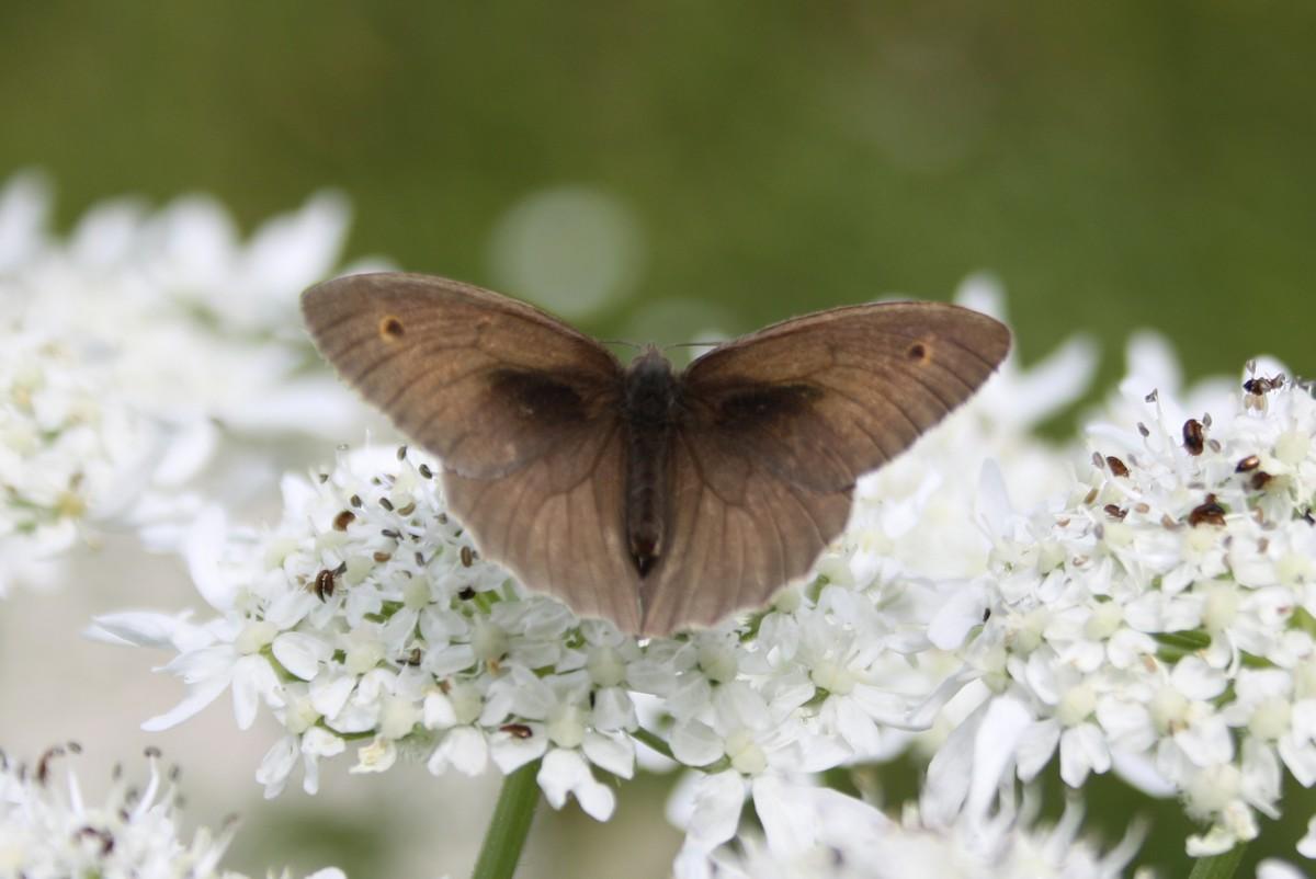 Bloemen en vlinderimpressies (8)