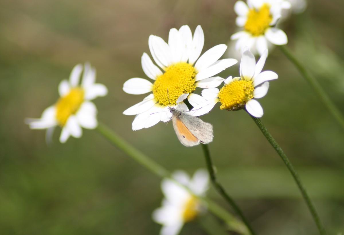 Bloemen en vlinderimpressies (80)
