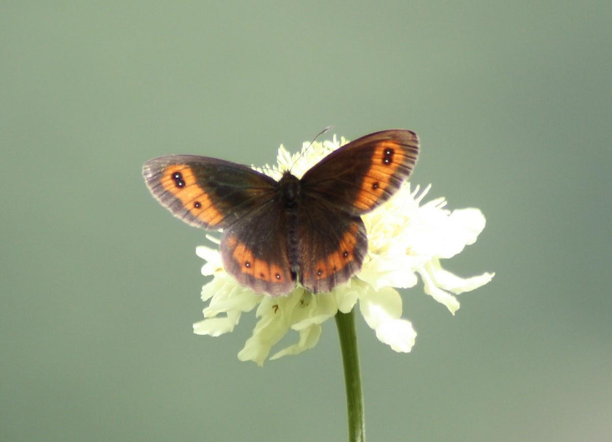 Bloemen en vlinderimpressies (81)