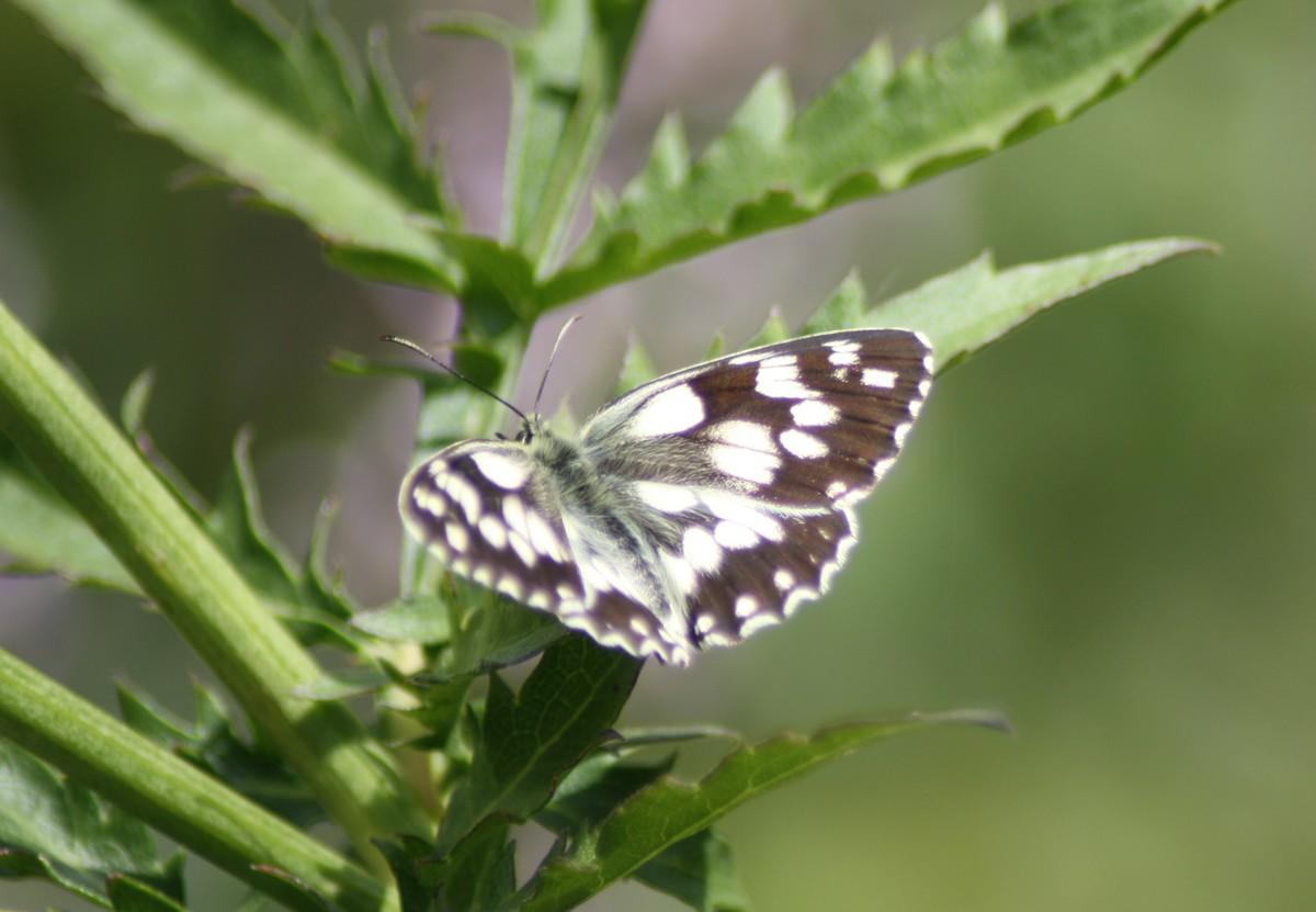 Bloemen en vlinderimpressies (83)