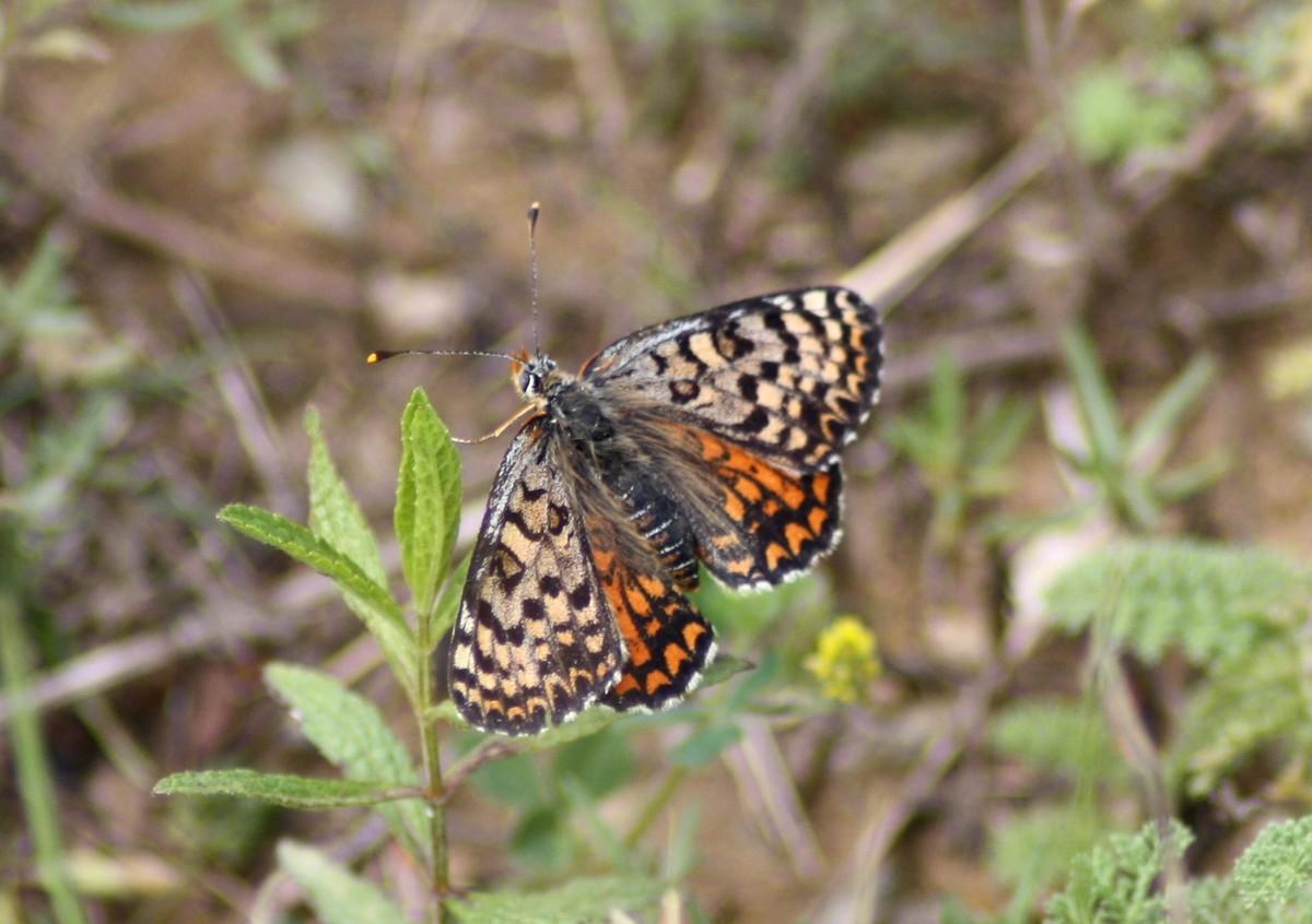 Bloemen en vlinderimpressies (84)