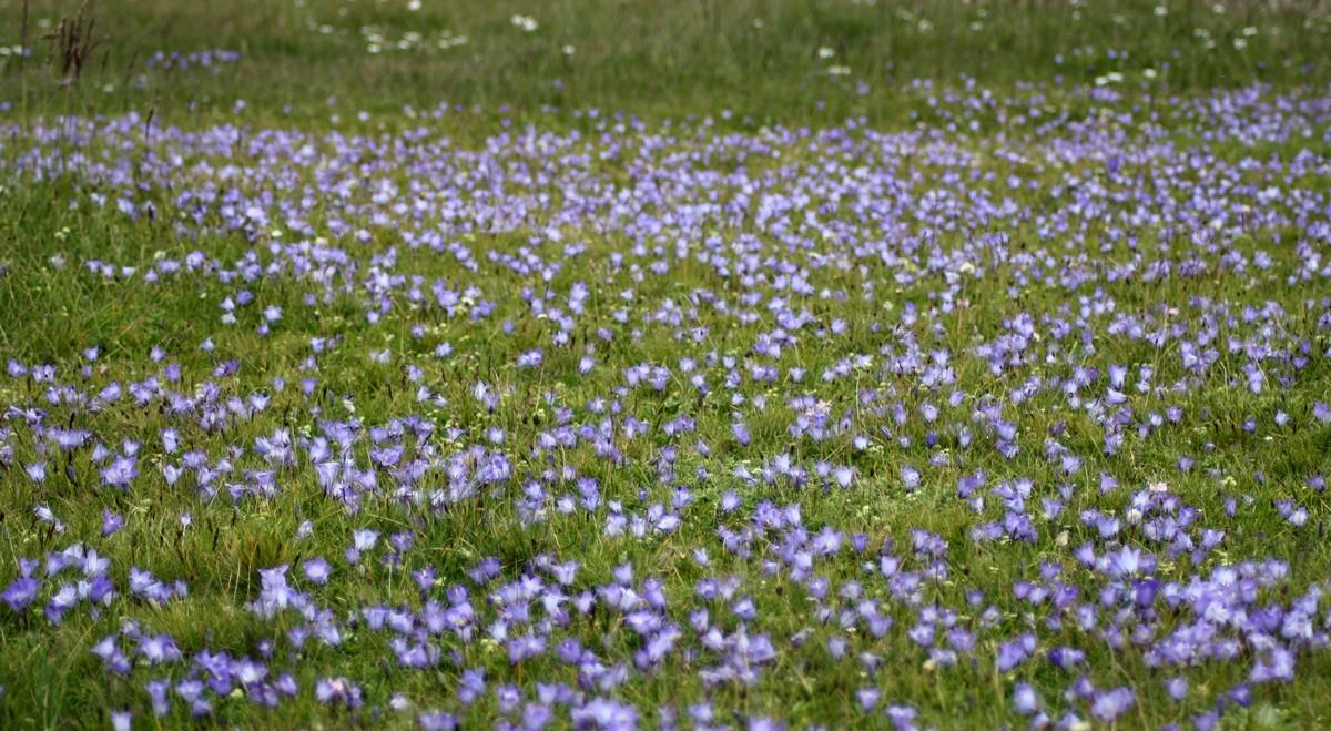 Bloemen en vlinderimpressies (86)