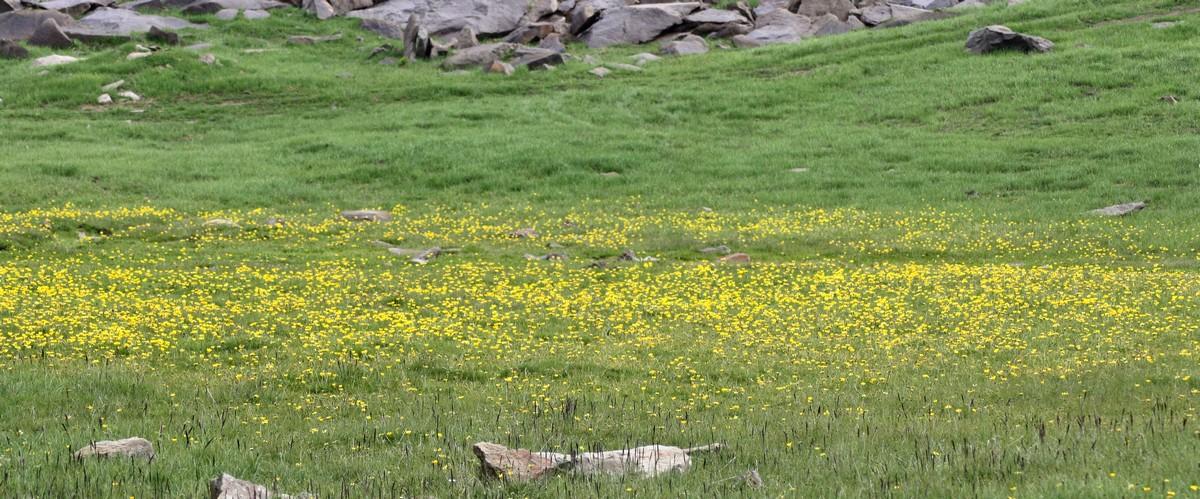 Bloemen en vlinderimpressies (87)