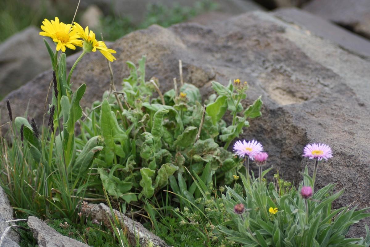 Bloemen en vlinderimpressies (88)