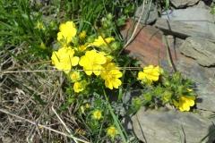 Bloemen en vlinderimpressies (1)