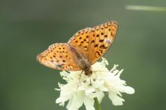 Bloemen en vlinderimpressies (12)