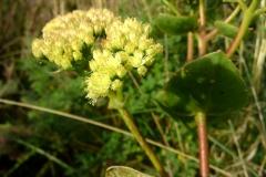 Bloemen en vlinderimpressies (14)