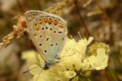 Bloemen en vlinderimpressies (16)