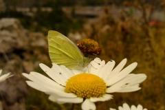 Bloemen en vlinderimpressies (17)