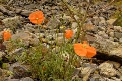 Bloemen en vlinderimpressies (19)