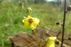 Bloemen en vlinderimpressies (23)