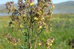 Bloemen en vlinderimpressies (27)