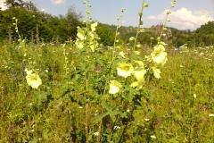 Bloemen en vlinderimpressies (29)