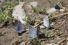 Bloemen en vlinderimpressies (4)