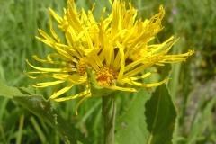 Bloemen en vlinderimpressies (49)