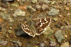 Bloemen en vlinderimpressies (52)