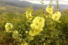 Bloemen en vlinderimpressies (53)