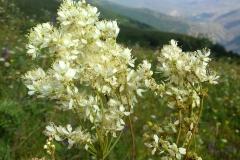 Bloemen en vlinderimpressies (55)