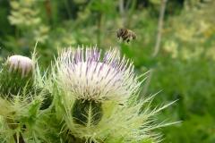 Bloemen en vlinderimpressies (57)
