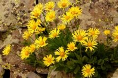 Bloemen en vlinderimpressies (60)